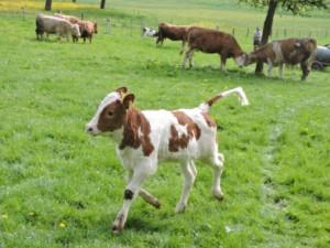 LAST MINUTE: Urlaub auf dem Bauernhof in den Sommerferien