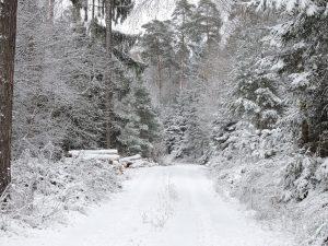 Wintereinbruch auf dem Zeltnerhof