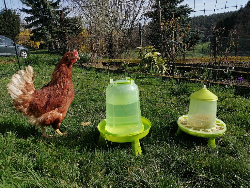 Hühner mieten, Tränke und Futter